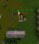 Animal Taming